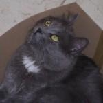 rio-enza-gatto-3