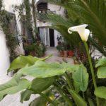 calla fiore centro storico grottaglie
